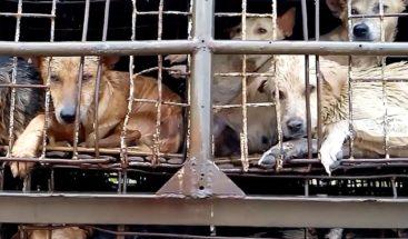 Camión repleto de perros enjaulados se dirige a un matadero de Vietnam