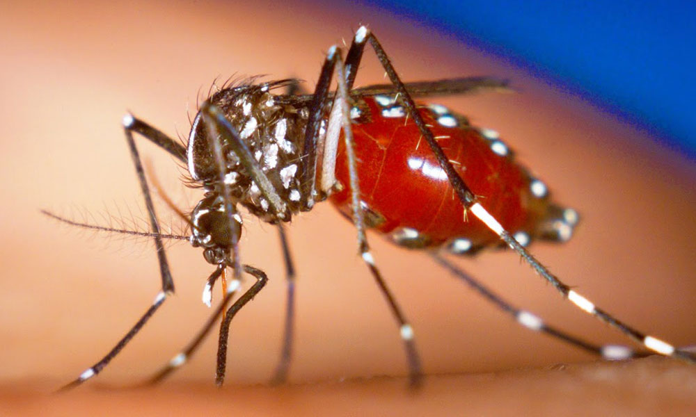 Zika, dengue y chikunguña crecen por confusión de síntomas