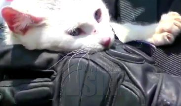 Rescatistas los arriesgan todo por salvar a un gato en Perú