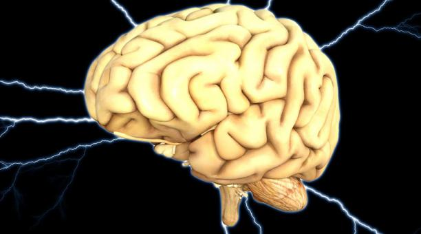 La glucosa es esencial para el funcionamiento del cerebro