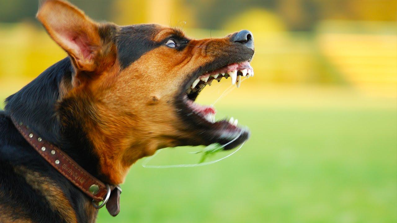 Así puedes evitar que un perro te muerda