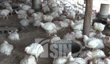 Vendedores en la frontera se quejan por escasez de pollo