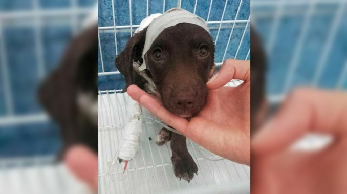 Condenan a hombre por despellejar vivo a un cachorro en Argentina
