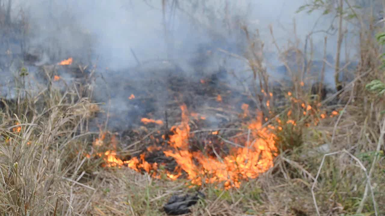 Bomberos combaten incendio forestal en La Romana