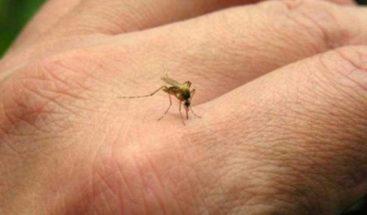 ¿Cómo protegerse contra los mosquitos?