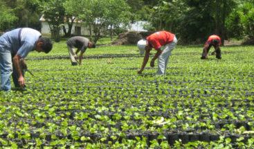 Ministro de Agricultura reactiva diálogo con sector agropecuario