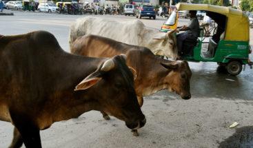 Multitud lincha hasta la muerte a un musulmán en la India por matar a una vaca
