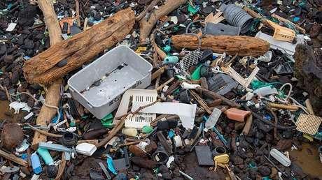 El plástico de los océanos puede ser transferido a la cadena alimenticia