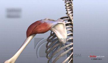 Existen alrededor de 400 enfermedades relacionadas a los dolores articulares