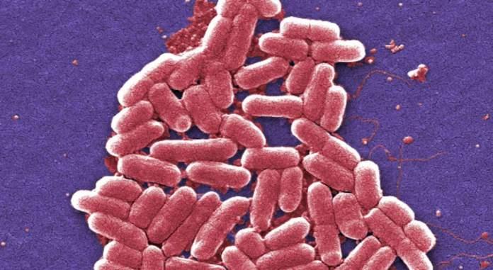 Identifican en EE.UU. una nueva infección resistente al antibiótico más potente del mundo