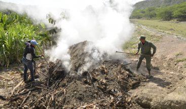 Medio Ambiente incauta miles de sacos de carbón y destruye hornos