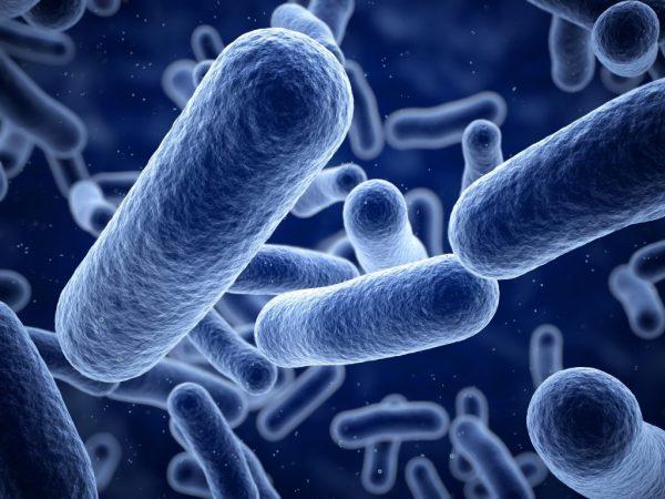Microbioma, el código genético de nuestras bacterias