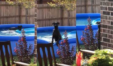 Mira la reacción de este perro tras ser pillado por su dueño en la piscina