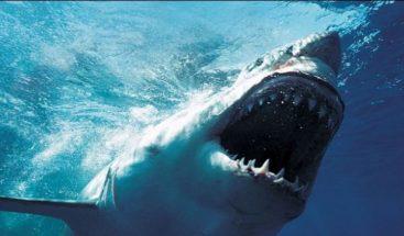 Muere un joven de 18 años atacado por un tiburón en el nordeste de Brasil