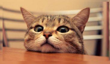 Miles de rusos exigen castigar a una menor por matar a un gato con un hacha