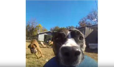 VIDEO: perro 'roba' cámara GoPro y graba una gran escena de persecución