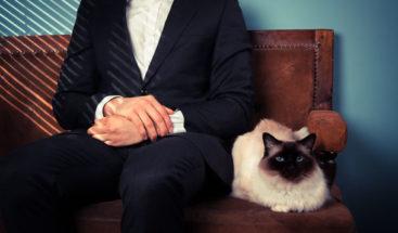 Estudio afirma que parásito común en gatos es causa de espíritu empresarial