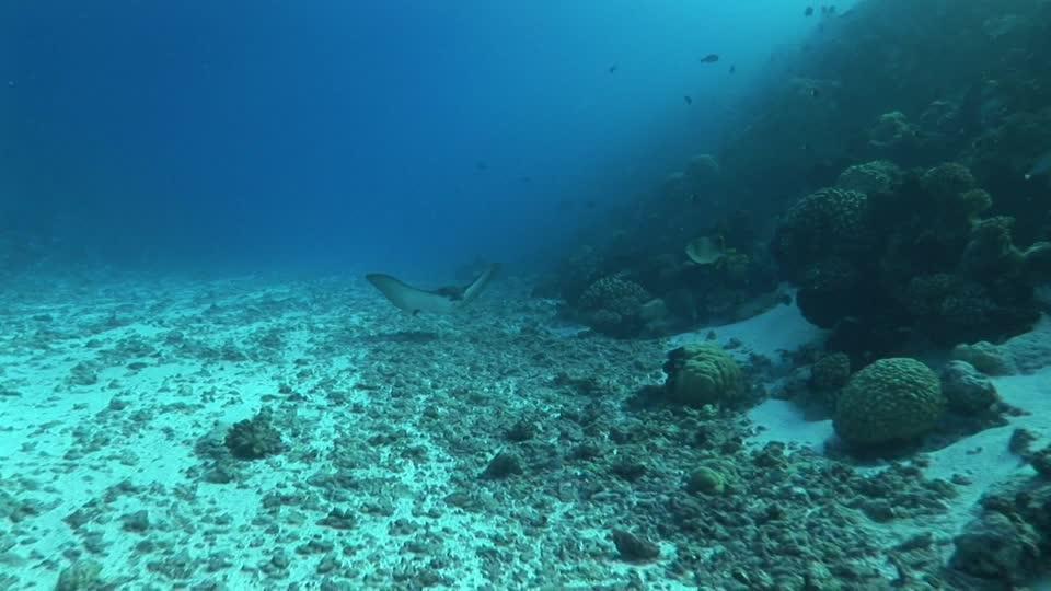 Los microorganismos de la superficie y fondo marino, 'íntimamente conectados'