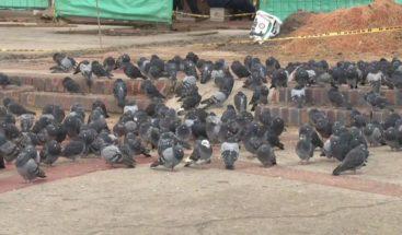 Más de dos mil palomas serán trasladadas de una plaza de Colombia