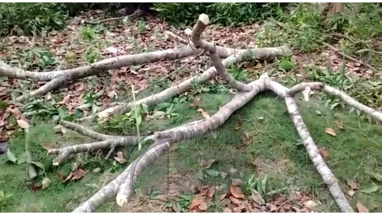 Mujer de 87 años muere al caerle rama de un árbol en La Romana