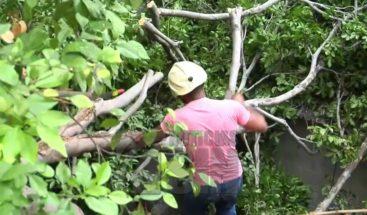 Cae árbol encima de vivienda en el sector Yaguita de Santiago