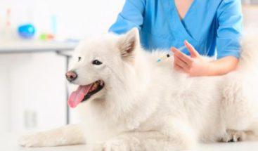 Una cura contra pulgas en mascotas podría prevenir zika y malaria en humanos