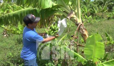 Agricultores reclaman electrobomba sea conectada al sistema eléctrico