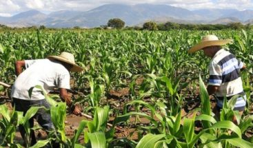 Agricultores de Monte Grande denuncian son despojados de sus tierras