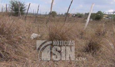 Productores zona noroeste denuncian están perdiendo cosechas tras sequía