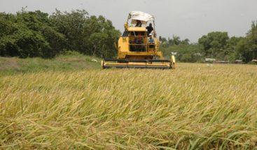 Productores de arroz acuerdan solución a quema de residuos en La Vega