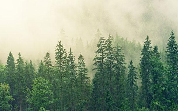 Paisajes del planeta, transformados por la extinción de especies