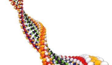 Genoma humano puede tener hasta 20% menos de genes de lo que se creía