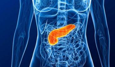 Produce proteínas en el páncreas, clave en crear detergentes ecológicos
