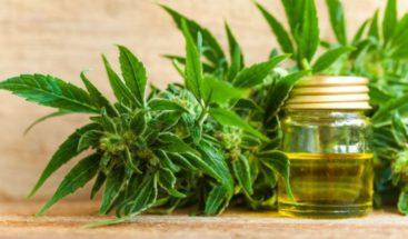 Gobernador Puerto Rico lanza plataforma de Programa Cannabis Medicinal