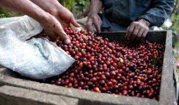Presidente Medina designa representantes de productores de café