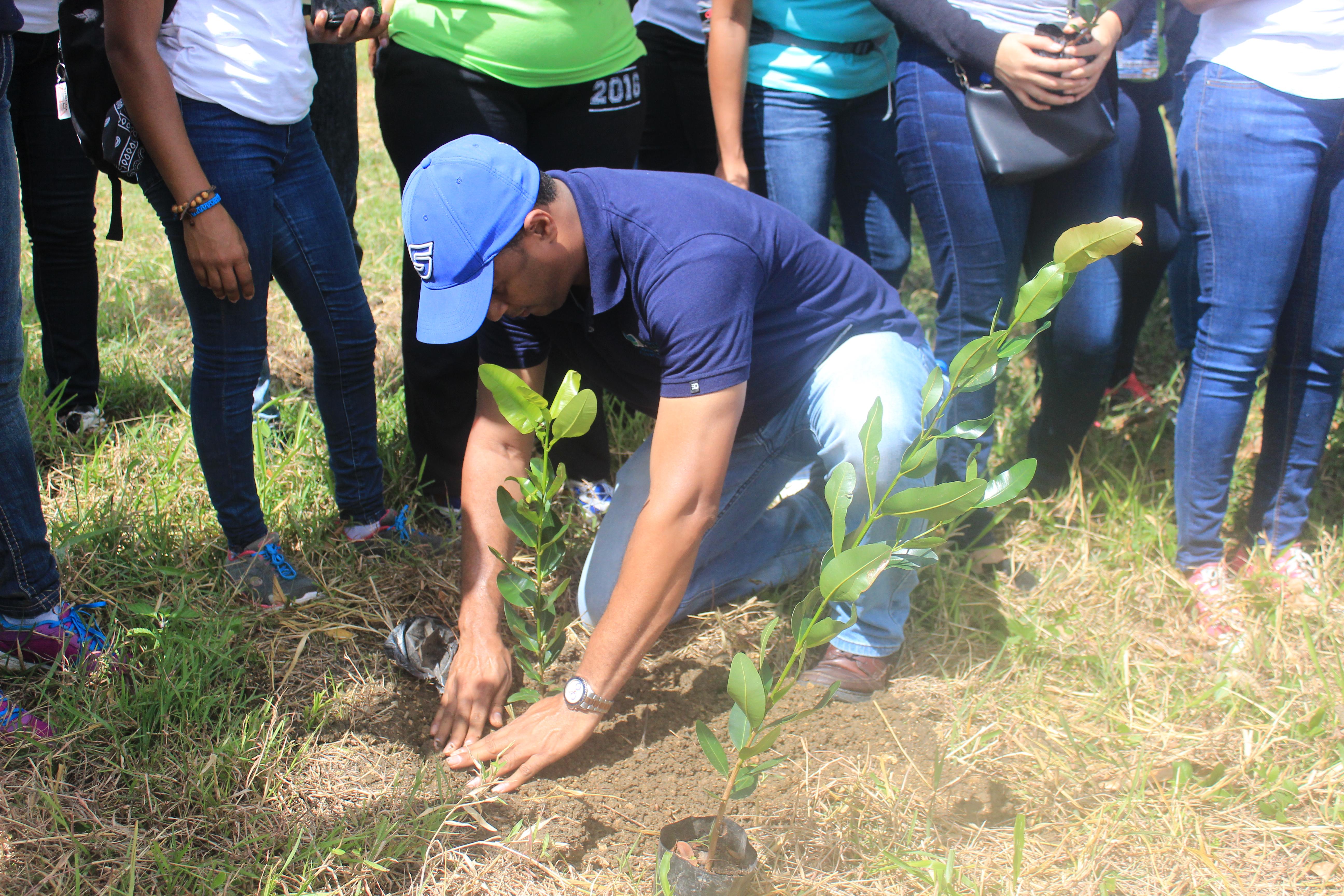 Siembran cientos de árboles durante jornada de reforestación