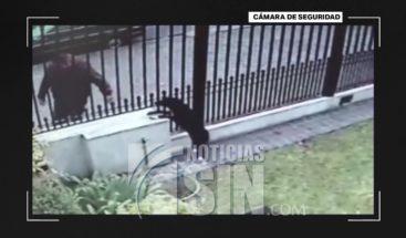 Hombre roba perrita cuando pasaba por una casa en Argentina