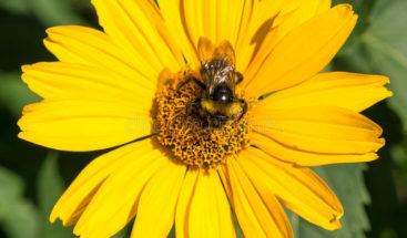 Polen de flores sirve de herramienta científica para conocer el pasado