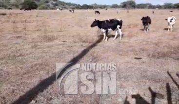 Sequía afecta a agricultores y ganaderos en línea noroeste