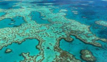 Blanqueo de la barrera de coral no se limita a las bajas profundidades