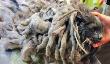 Bob Marley, gato abandonado bajo su propio pelo
