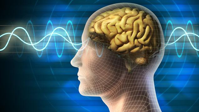 Identifican filtro cerebral que cancela el sonido de los propios pasos