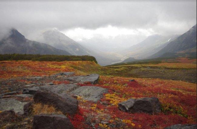 Plantas cada vez más altas se apoderan de la tundra ártica