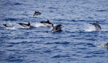 La contaminación por PCB amenaza con extinguir las orcas, según estudio