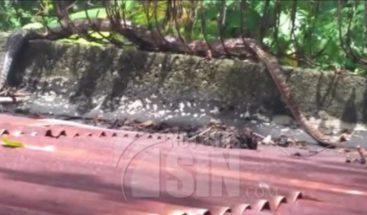 Residentes en Haina piden capturar culebra