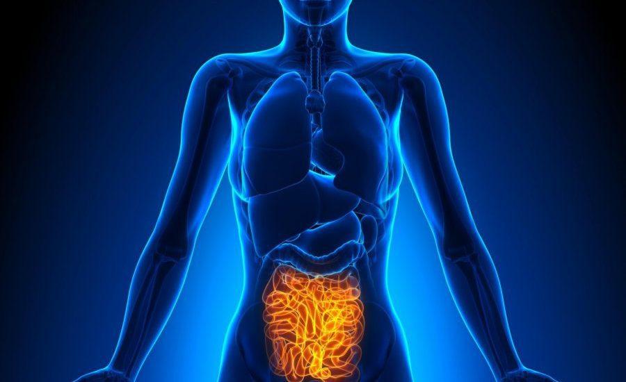 Investigadores mexicanos diseñan sistema en tratar trastornos digestivos