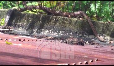Toman medidas en Haina para evitar que culebra penetre a sus patios