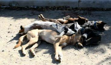 Envenenan animales y amanecen muertos en barrio de Montecristi