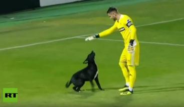 Perro invade cancha y paraliza durante varios minutos partido de fútbol