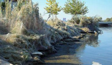 Telaraña gigante cubre 10.000 metros cuadrados en una playa de Grecia